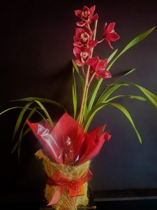 CYMBIDIUM CURRENT PLANT